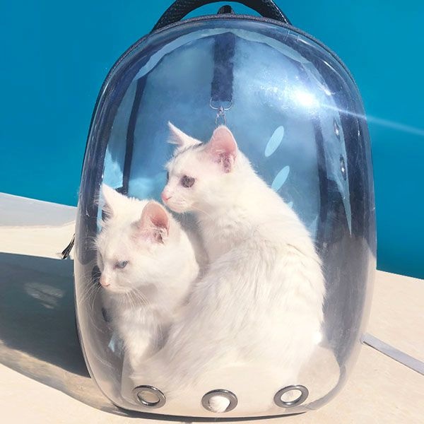 INOpets.com Anything for Pets Parents & Their Pets Mobile Transparent Pet Backpack